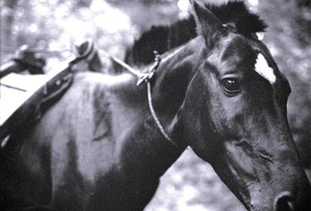 Banana Horse - Ometepe, Nicaragua, 2008