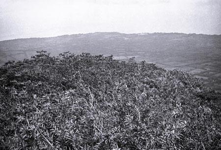 Breaking the Treeline I - Ometepe, Nicaragua, 2008